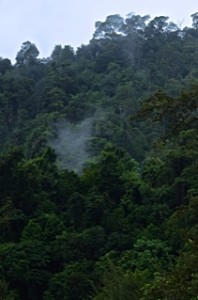 The Jungle, Borneo