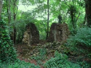 The woods with ruins